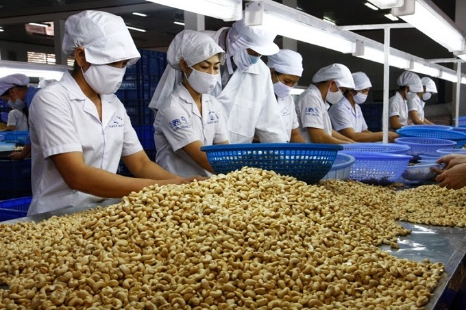 thủ tục nhập khẩu hạt điều thô
