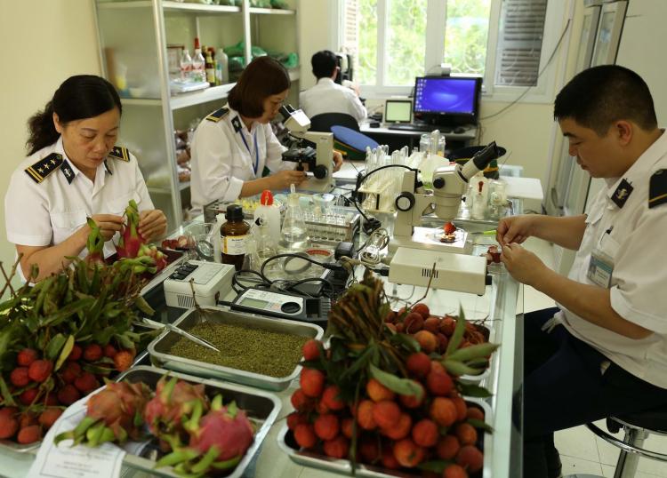 kiểm dịch thực vật